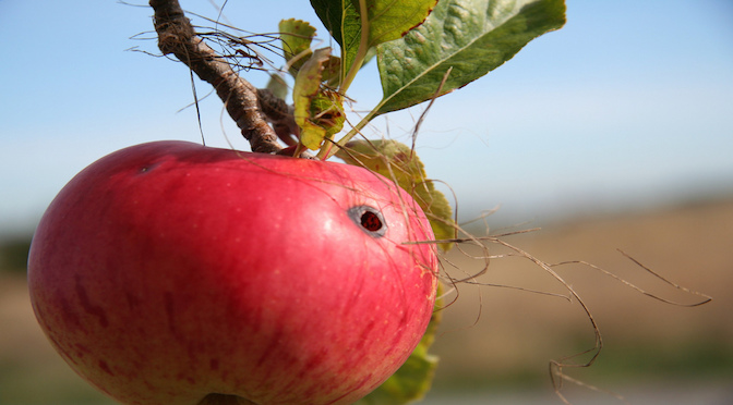 La pomme et le ver