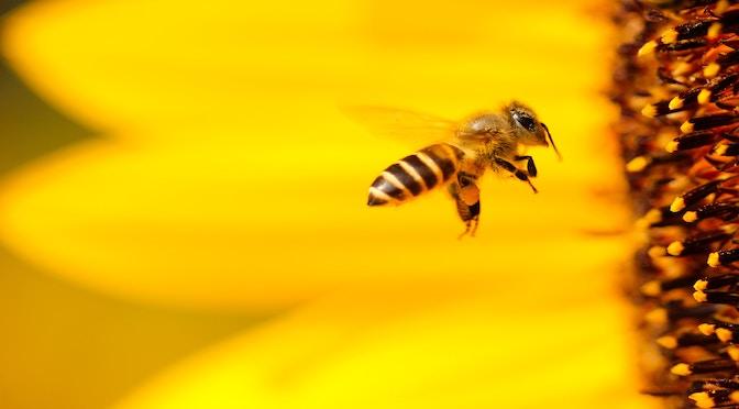 Les mathématiciennes abeilles (épisode 69)