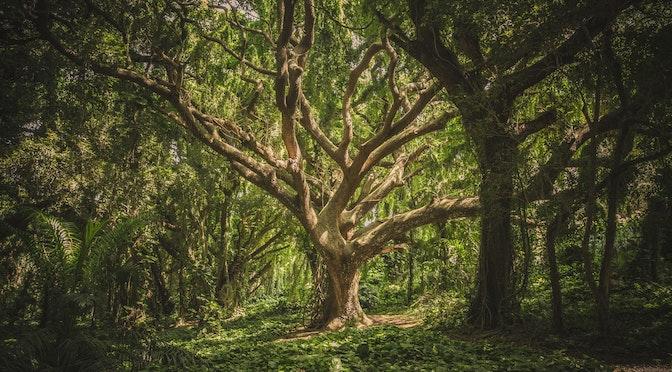 Le cerveau face à la forêt (épisode 54)
