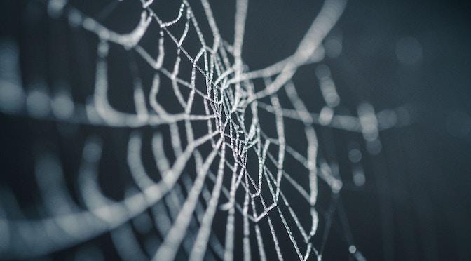 Toile d'araignée gelée