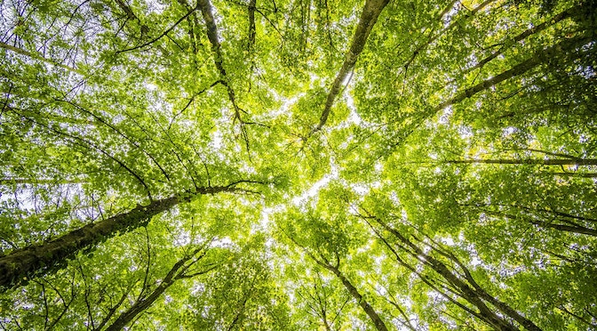 Vue de sous des arbres